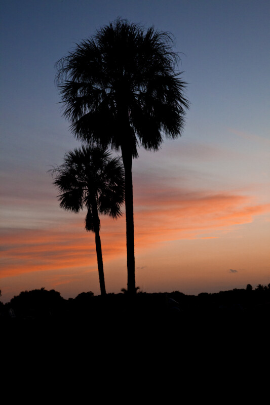 Two Palm Trees Before Sunset
