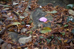 Two Pink Leaves on a Rock