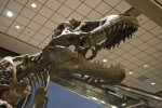 Tyrannosaurus Rex Skull at the Pittsburgh Airport