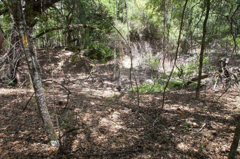 Uneven Ground of a Sinkhole at Chinsegut Wildlife and Environmental Area