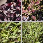 United States Botanical Garden photographs