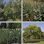 University of California, Davis Arboretum photographs