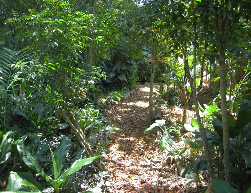 Unpaved Path