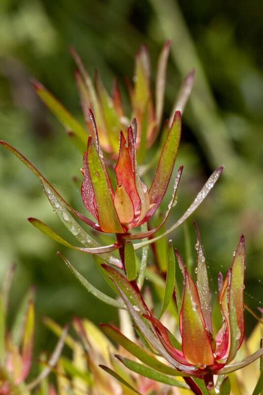 Up-Close View of Plant
