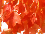 Up Close View of Orange Leaves