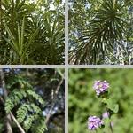 USF Botanical Gardens photographs