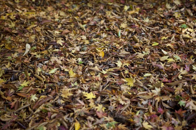 Variety of Fallen Leaves
