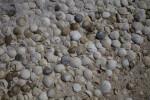 Variety of Seashells at Biscayne National Park