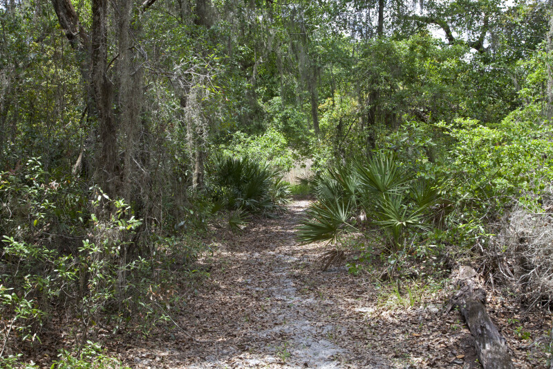 Variety of Vegetation at Chinsegut Wildlife and Environmental Area
