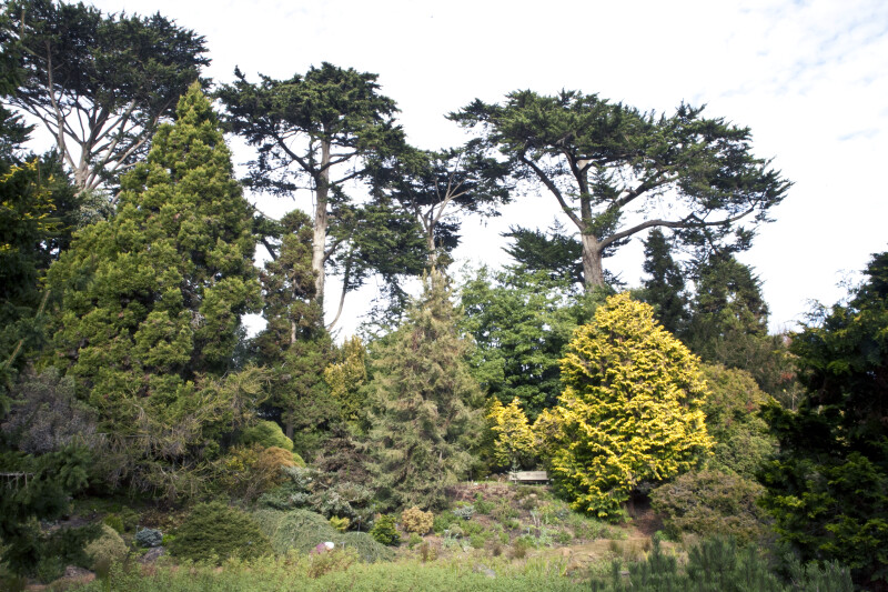 Various Coniferous Trees