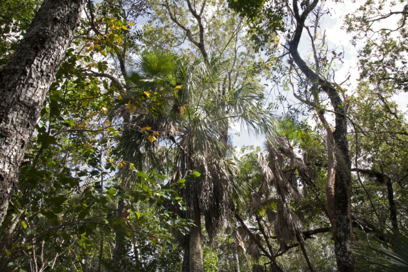 Various Trees at Mahogany Hammock of Everglades National Park