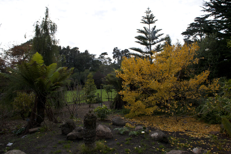 Various Trees at the San Francisco Botanical Garden