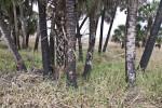 Various Trees Growing Amongst Tall Grass at Myakka River State Park