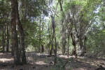 Various Trees, Spanish Moss, and Dry Ground