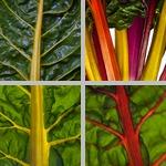 Vegetables photographs