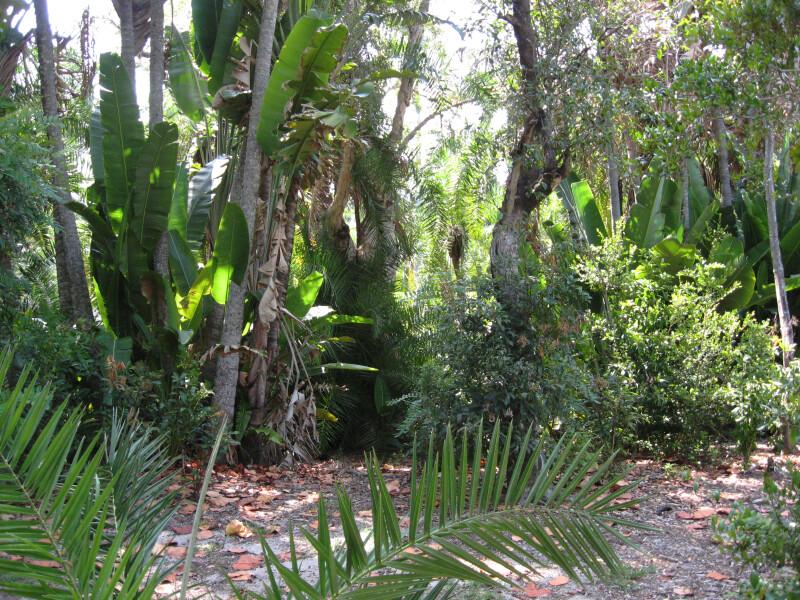 Vegetation Along Path