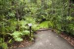 Vegetation and Algae-Filled Water Along Gumbo Limbo Trail