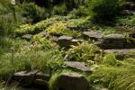 Vegetation and Rocks