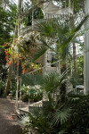 Vegetation and Spiral Staircase