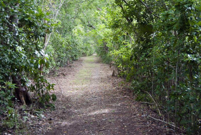 Vegetation at Bear Lake Trail