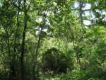 Vegetation at Corkscrew