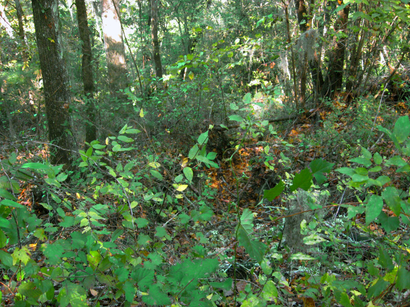 Vegetation at Devil's Millhopper