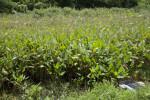 Vegetation at Stormwater Treatment Pond