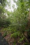 Vegetation Including Gumbo-Limbo Trees, Ferns, and Schefflera