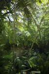 Vegetation Including Palm Trees