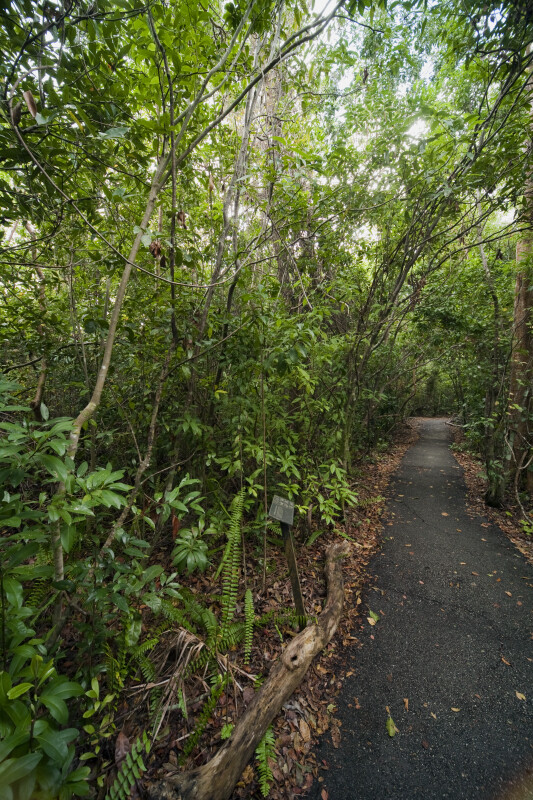 Vegetation Including Several Arching Trees