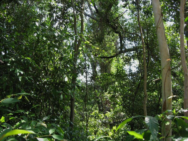 Vegetation Near Path