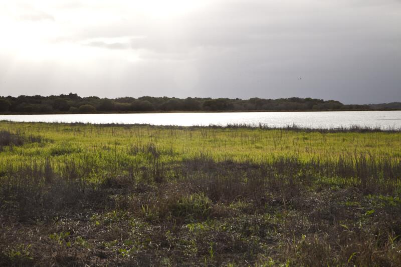 Vegetation Near Water at Myakka River State Park