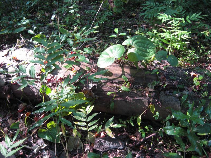 Vegetation on Log