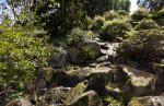 Vegetation on Rocks