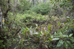 Vegetation Surrounding Stagnant Water