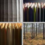 Vertical Lines photographs