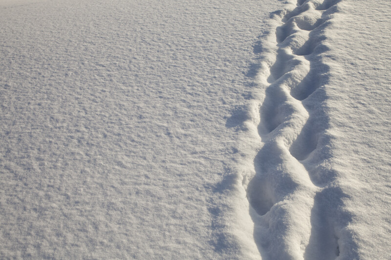 Vertical Path Through the Snow