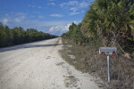 View of Birdon Road at the Big Cypress National Preserve