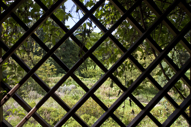 View Through Trellis