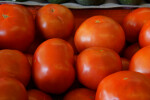 "Vine Ripe ""Beefstake"" Tomatoes at the Tampa Bay Farmers Market"