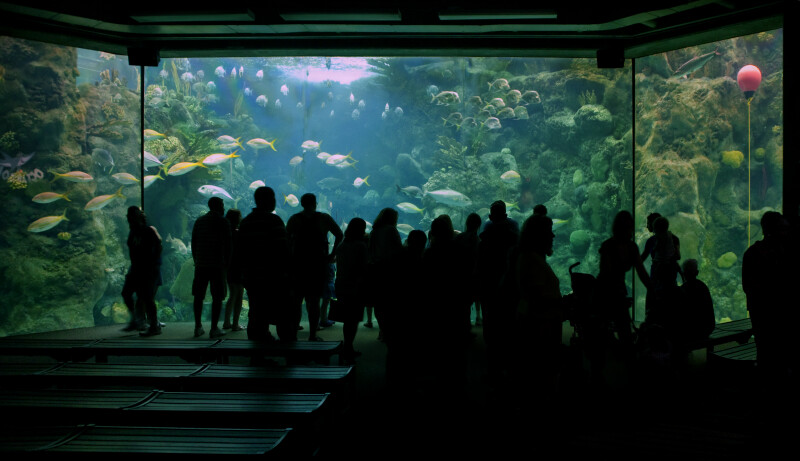 Visitors at Aquarium