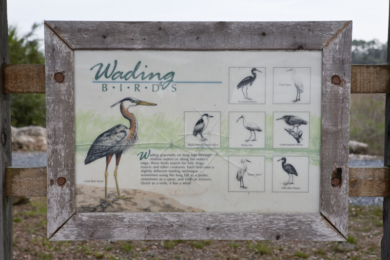 Wading Birds Sign