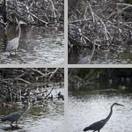 Wading photographs