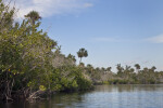 Water, Mangroves, and Palm Trees at Halfway Creek in Everglades National Park