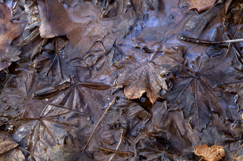 Water on Dead Leaves