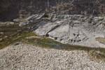 Water on Limestone at the Espada Acequia