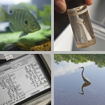 Water Quality Testing photographs