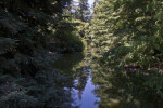 Waterway Running Through Trees at the UC Davis Arboretum