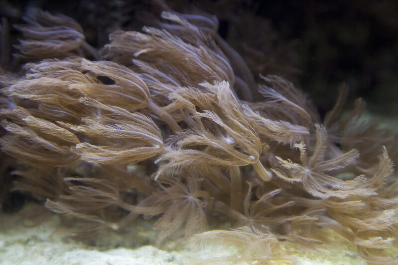 Wavy Invertebrate at The Florida Aquarium