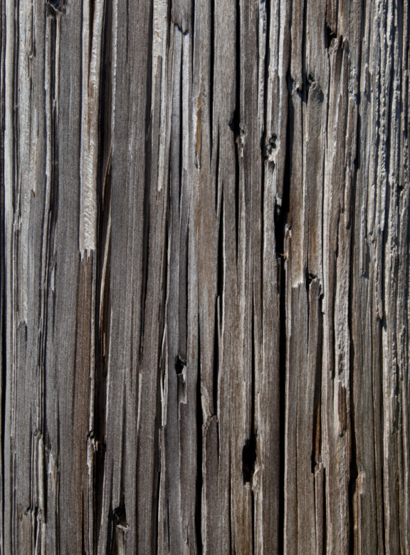 Weathered Utility Pole